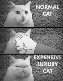 Do-it-yourself luxury cat