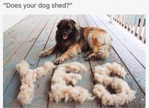 Does your dog shed