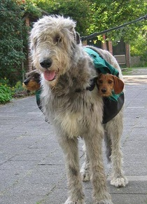 Dog and  subwoofers