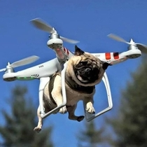 Dog flying on a drone They are evolving