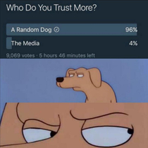 Dog or media Write it