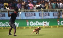 Dog shits in ground and run around during India vs England match live