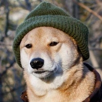 Doge after  month in Russia