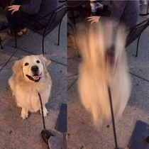 Doggo jumps to another dimension