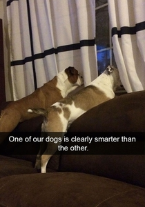 Dogs are definitely smarter than humans