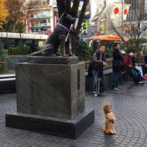 Dogs take tourist photos too