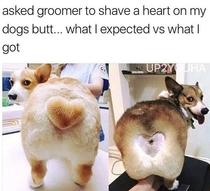 Dont forget to tip your dog groomer