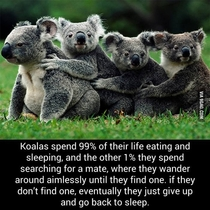 Dont know how accurate this is but it looks like Im a Koala