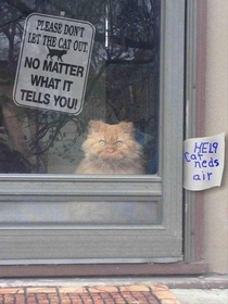 Dont listen to the cat
