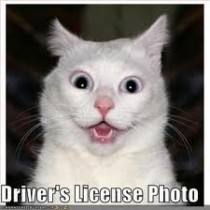 Drivers license photo