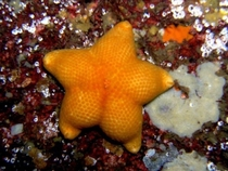 Drunken starfish with a fantastic arse lying face down in a pool of his own vomit