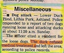 Duck dont care Duck dont give a shit