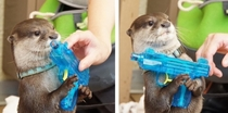 Due to budget cuts the Navy SEALs will be replaced by the Navy OTTERs