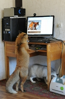 Edgard would surf the web all day looking at lady-foxes instead of being with his loving wife whos right there under that table trying to fix the god damn printer who broke again