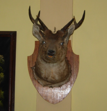 Either the deer or the taxidermist was drunk