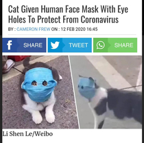 Even cat has a mask in China
