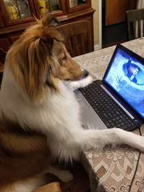 Even my collie has been forced to work from home