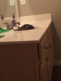 Every night while going to the bathroom