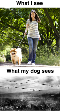 Every time someone walks their dog past my yard