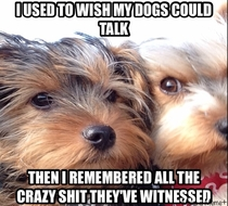 Everyone with pets understands this theyre witnesses to what you and your family gets up to behind closed doors