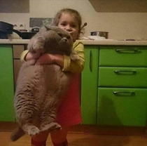 Fat cat with its human servant