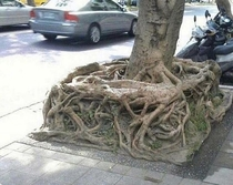 Finally found the square root