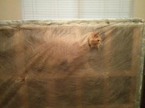 Finally I get a replacement for the couch Ive been sleeping on - only to find it has bedcats