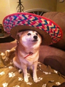 finally ready to celebrate Cinco de Mayo realize its a day late