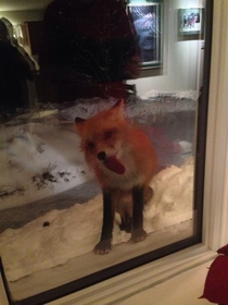 Firefox has encountered a problem with Windows