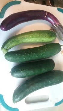 First harvest of dildos from my dildo garden