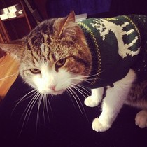 First time owning a cat Had no idea sweaters resulted in the saddest defeated cat emotions