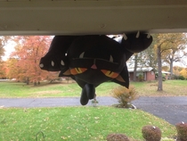 For Halloween I had an inflatable cat on my roof Last night it was very windy This is what greeted me when I opened the door this morning Almost had a heart attack