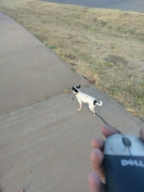 Found a dog yesterday Had to improvise a leash