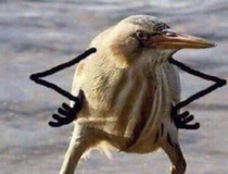 found this picture of a bird and it had arms and its now the most important thing in the internet world