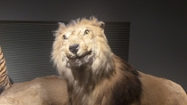Found this poorly stuffed lion in a Chinese museum last week