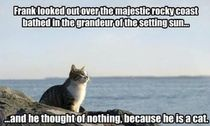 Frank the philosophy cat