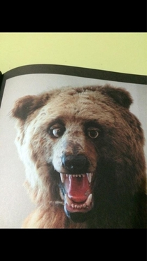 Friend got a book called Crap Taxidermy this is my favorite