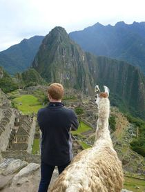 Friend went to Machu Picchu Ginger Llama decided to join him