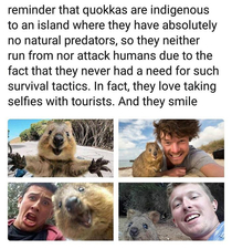 friendly fellas them quokkas