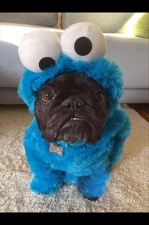 Friends  year old saw this photo and freaked out What does Cookie Monster have in his mouth