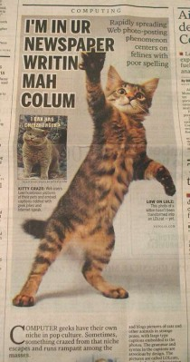 Frisky feline takes over newspaper spread paper describes LOLCats as felines with poor spelling