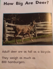 From my daughters library book This is how we weigh things in America
