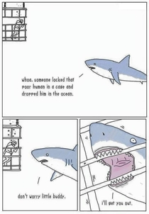 From the sharks perspective