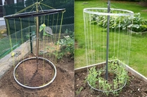 Garden Trellis using bike rims