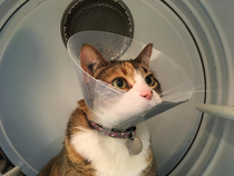 Gave our cat the cone so she jumped into the dryer and it looked like she was commanding a space shuttle