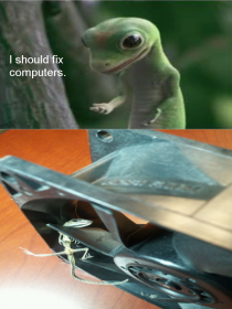 Geico lizard follows dream