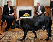 German Chancellor Angela Merkel has a known fear of dogs Well guess who Vladimir Putin brings with him every time she visits him