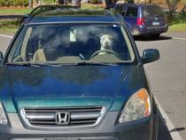 Get in loser were going to Petco