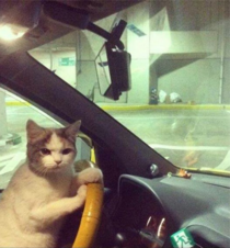 Get in the car loser Were Going Shopping