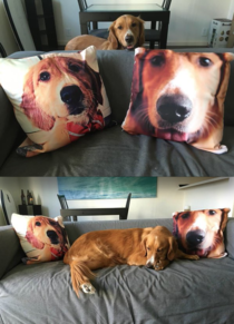 GF told me I should get some pillows for my couch